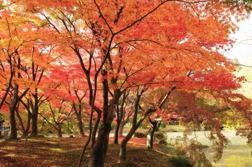 京都 紅葉 シーズン