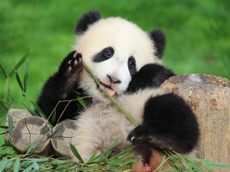 【アドベンチャーワールド】赤ちゃんパンダに会いに和歌山へ♪東京から高速バスの旅