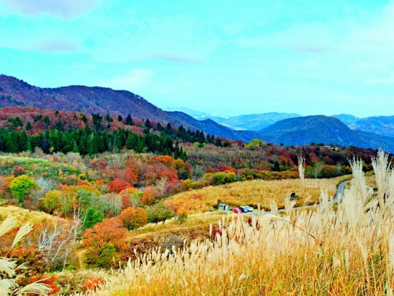 一面のススキと紅葉のコラボレーション!【兵庫】上山高原の見どころ紹介
