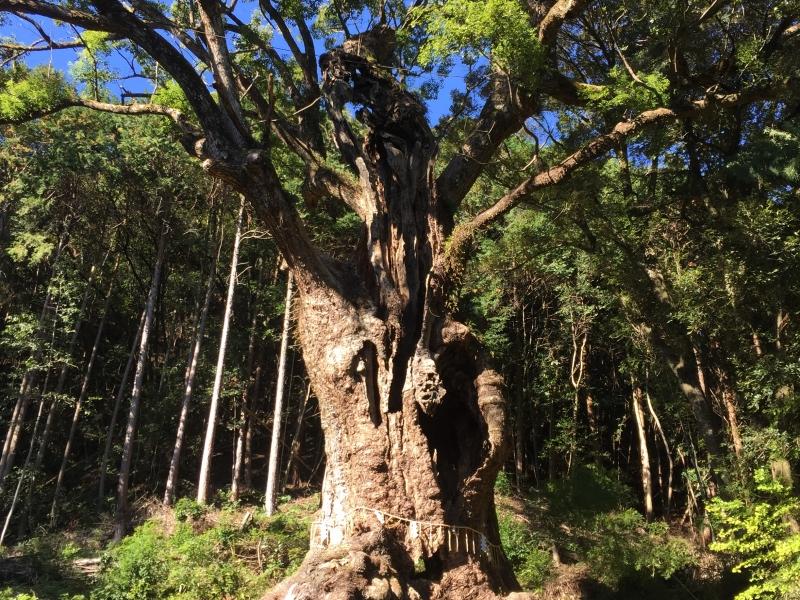 【佐賀県】縁結びの「武雄神社」と、自然の力みなぎるパワースポット「武雄の大楠」