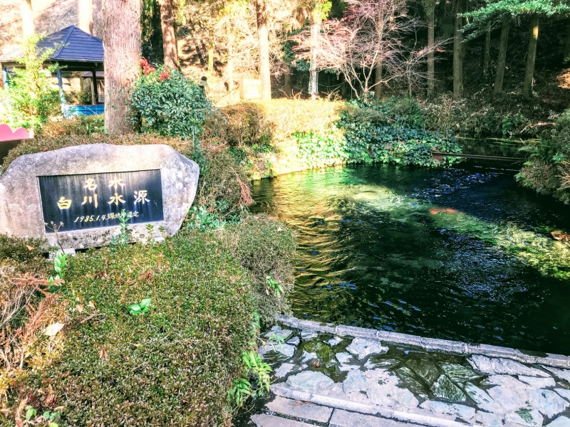 【熊本】阿蘇の白川水源で癒されよう!上質な湧水は持ち帰りもOK!