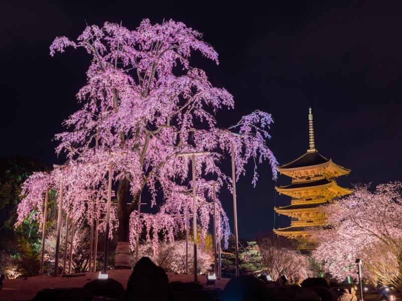 【2019】京都のおすすめ桜名所34選!お花見にぴったりなスポット厳選