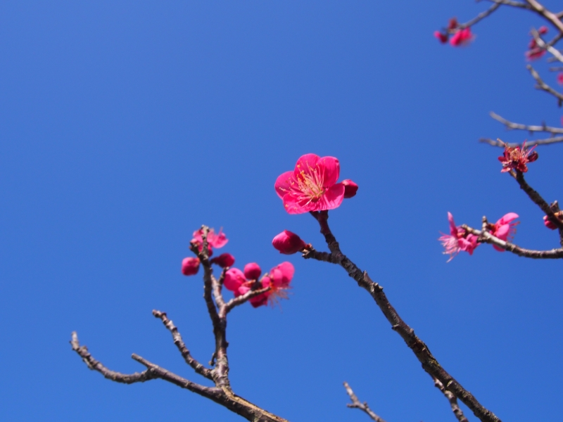 【和歌山】南部梅林で冬のハイキング!限定とろとろ「いももち」食べ歩き