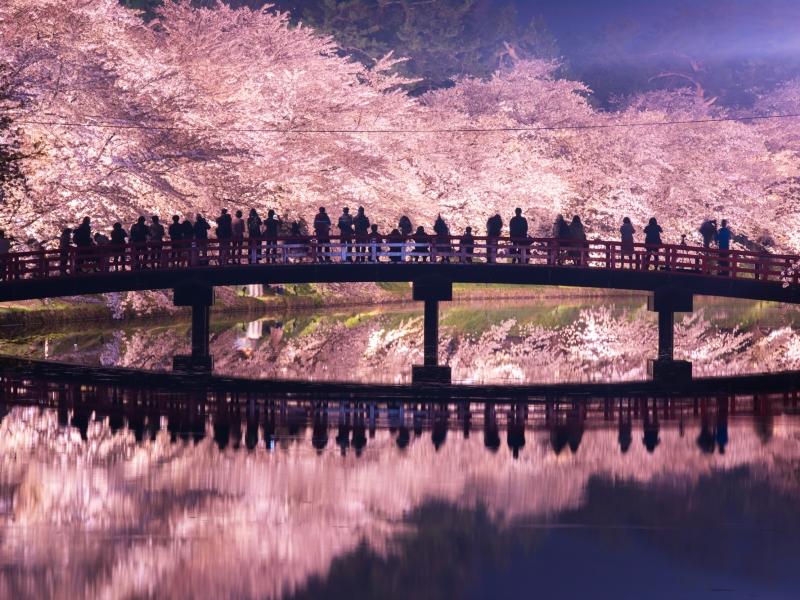 春本番を迎える4月。桜やネモフィラ、つつじ、藤などの花のお祭りが全国各地で開催され、ビールフェスなど野外イベントも増える時期です。4月に開催される全国の