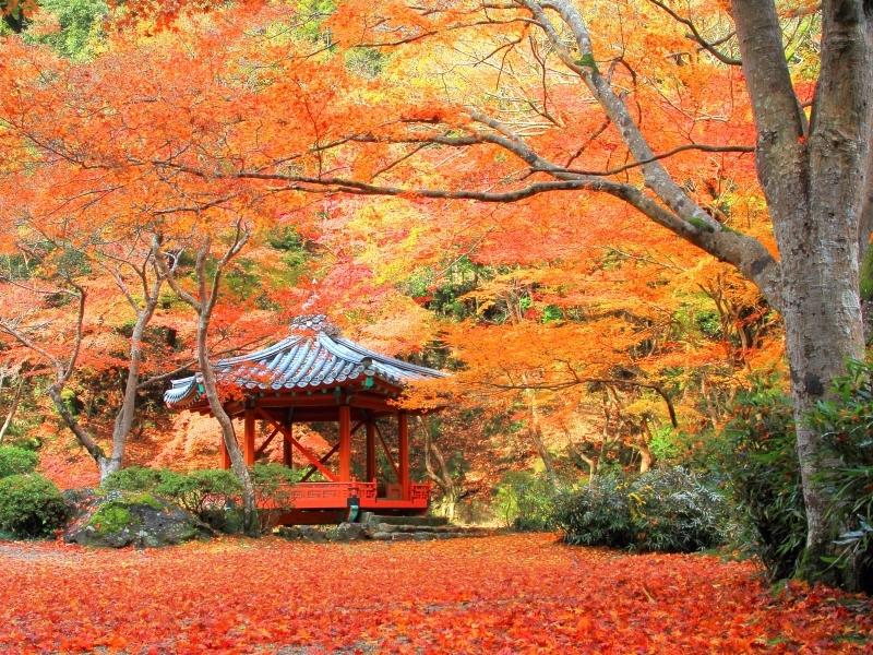 【2019】11月の国内おすすめ旅行先28選!秋を満喫できる観光地特集