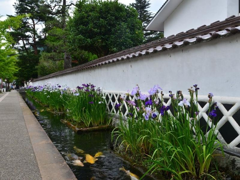 鯉が泳ぐ城下町。「山陰の小京都」島根県・津和野を歩く