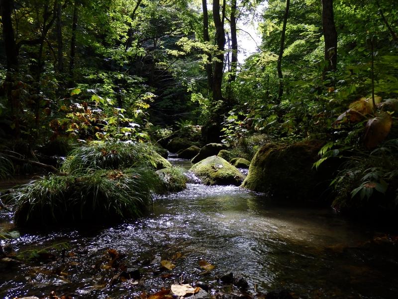 【青森】苔と渓流のコントラスト!奥入瀬渓流を散策