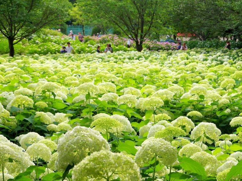 【関東】夏のおすすめ花畑42選!初夏〜真夏に見頃を迎える花の名所ガイド