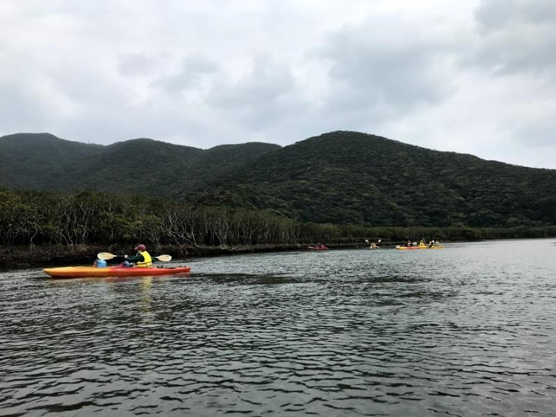 【奄美大島】自然を満喫!マングローブパークで気軽にカヌー体験♪