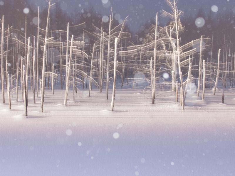 静かな森で雪と光の演出を、北海道・美瑛の青い池ライトアップ