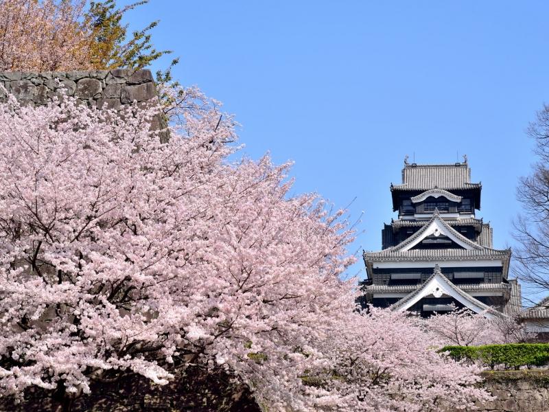 熊本市の人気観光スポットTOP10!旅行好きが行っている観光地ランキング