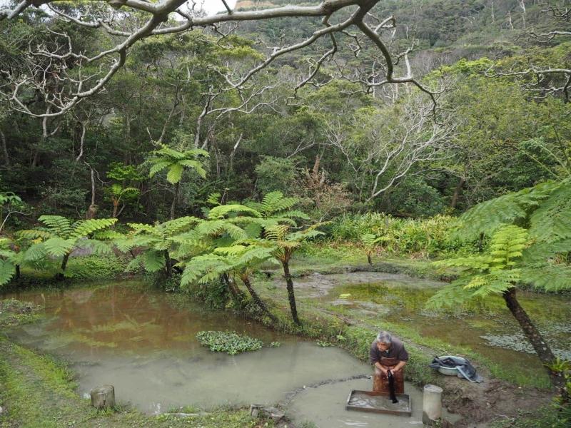 奄美大島限定!伝統工芸の泥染めは体験すべし!