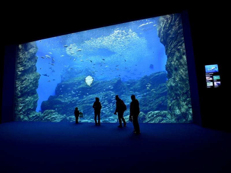 東北の人気水族館TOP7!東北地方の水族館をランキングで一挙紹介
