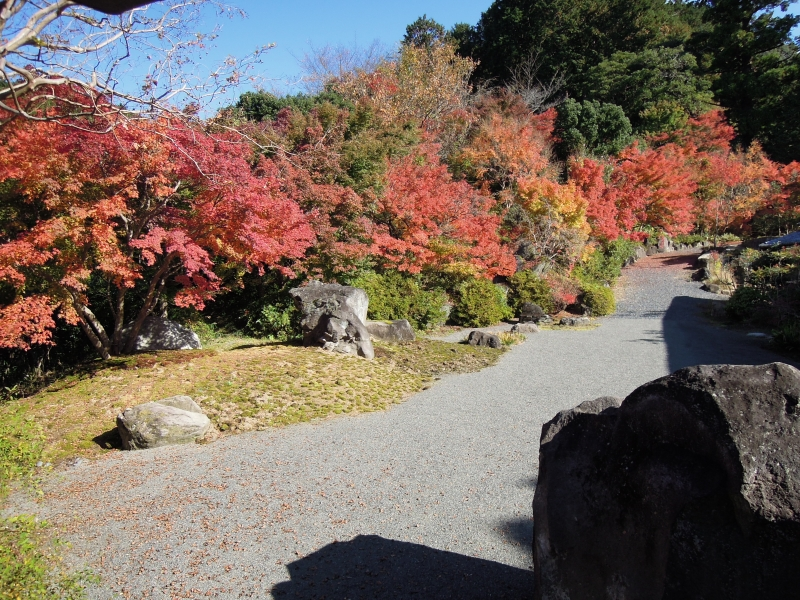 【大阪】まさに穴場!庭園の紅葉が素晴らしい弘川寺