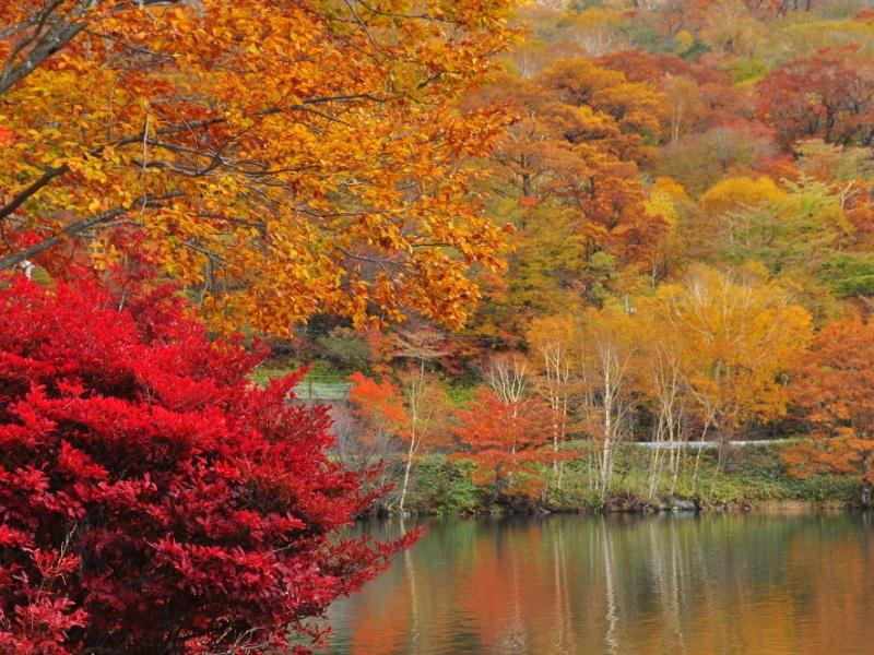 【群馬】秋の風物詩 絶景オススメ紅葉スポット