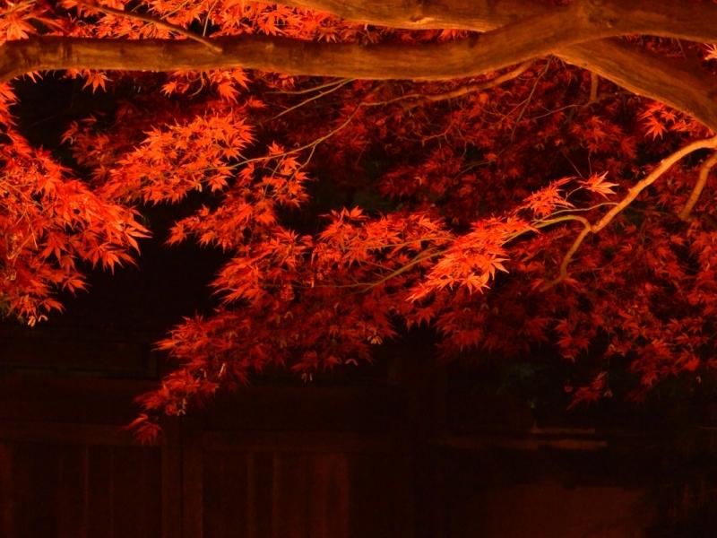 【2019】一味違う紅葉を夜も楽しもう!秋のライトアップスポットIN群馬