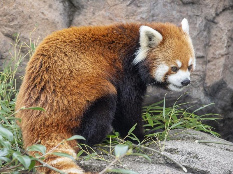 広島のおすすめ水族館・動物園5選!人気の水族館&動物園を一挙紹介
