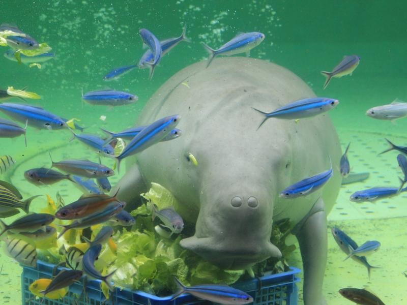 三重の人気水族館TOP3!県内の水族館をランキングで一挙紹介