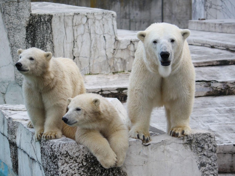 北海道のおすすめ動物園13選!動物に会える人気スポット特集