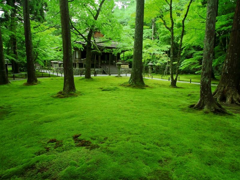 京都のおすすめ苔寺5選!美しい苔の庭が広がる名所特集