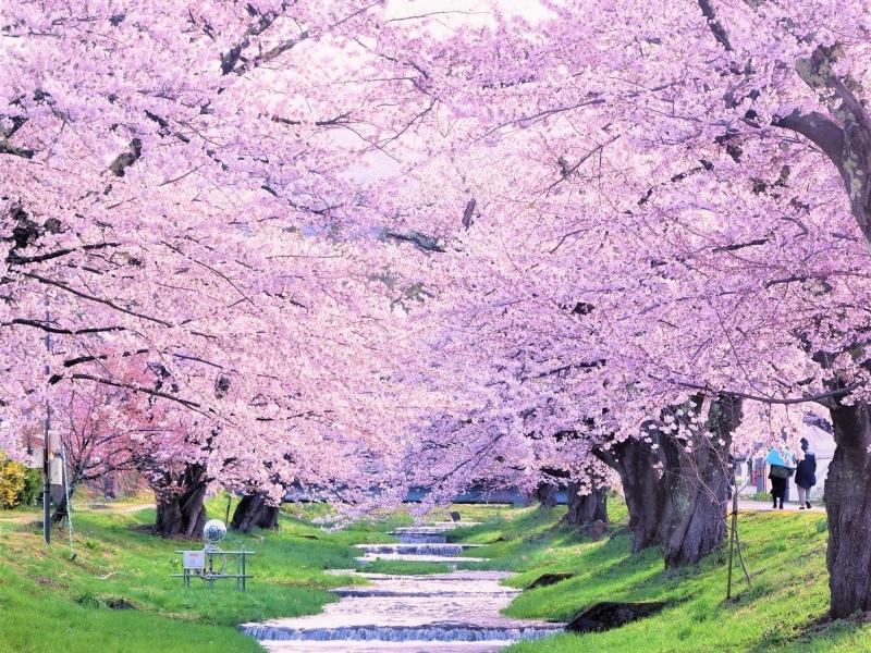 春色めぐり福島さくら紀行4選と立ち寄りスポット