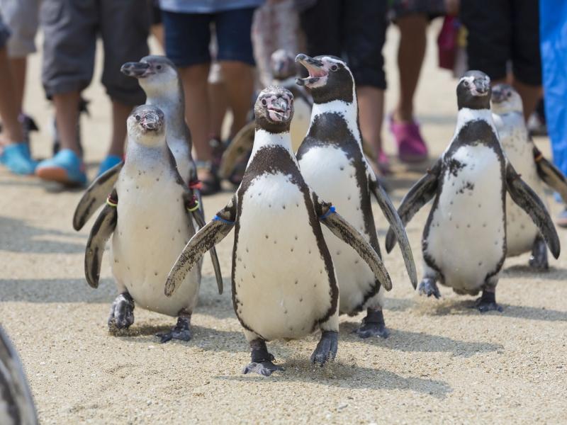 長崎のおすすめ水族館・アクティビティ4選!人気のイルカウォッチングも