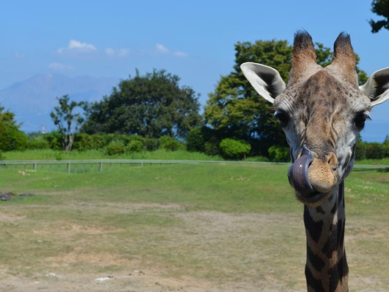 ここはサバンナ!?可愛いコアラにも会える、鹿児島の平川動物公園♪