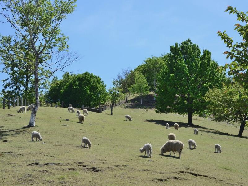 群馬のおすすめ牧場6選!人気の牧場を一挙紹介