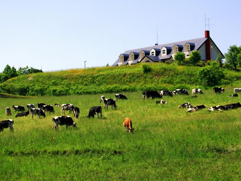 北海道のおすすめ牧場16選!人気の牧場を一挙紹介