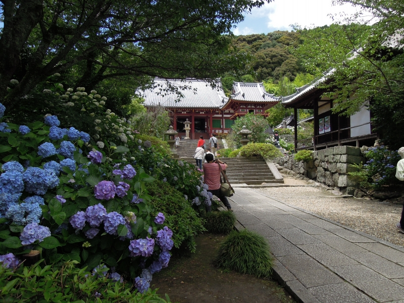 【奈良】約1万株のアジサイが咲く矢田寺を参拝