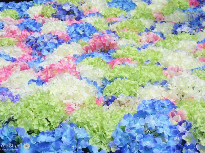 水中花の紫陽花やクジャクで話題の雨引観音【茨城】
