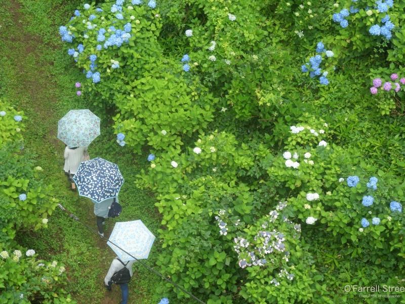 雨だって出かけたい!「紫陽花」と「アマゾンの巨大魚」と「和文化」な一日【栃木】