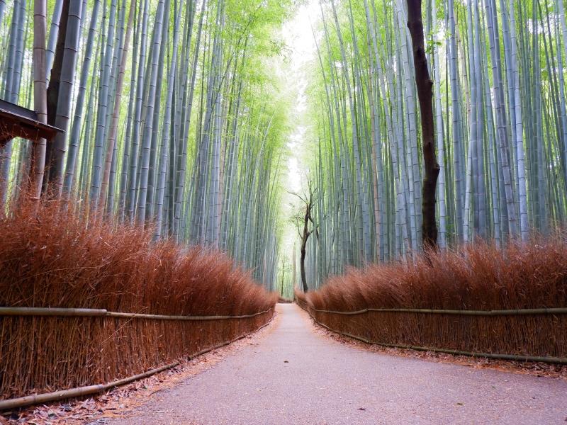 【京都】自然豊かな嵐山で行きたい!おすすめスポット12選