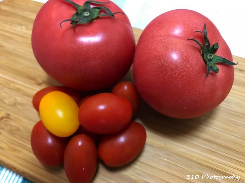 【宮城】デリシャスファームで濃厚な幻のトマトを味わいまくろう!