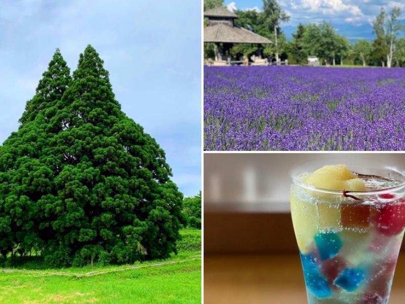1位は山形県の小杉の大杉 / トトロの木!インスタいいね数TOP10(2020年7月)