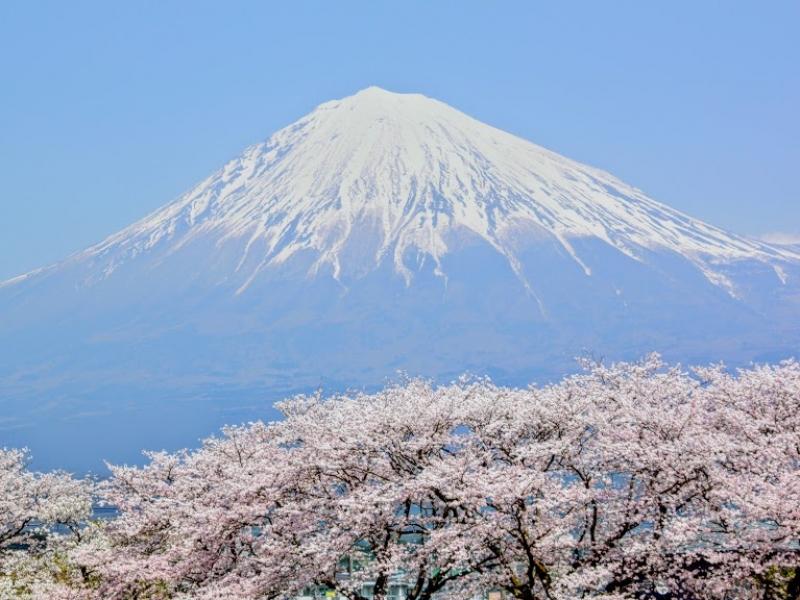 【静岡】富士山を鎮め、桜を咲かせる女神さまがいる富士山本宮浅間大社