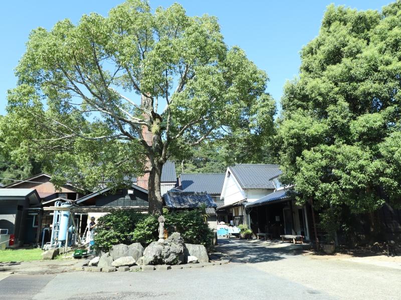 【千葉】発酵づくしの空間!神崎町の酒蔵・寺田本家とカフェうふふ