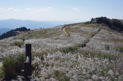 和歌山県【生石高原】絶景「ススキのじゅうたん」は11月中旬迄が見頃!