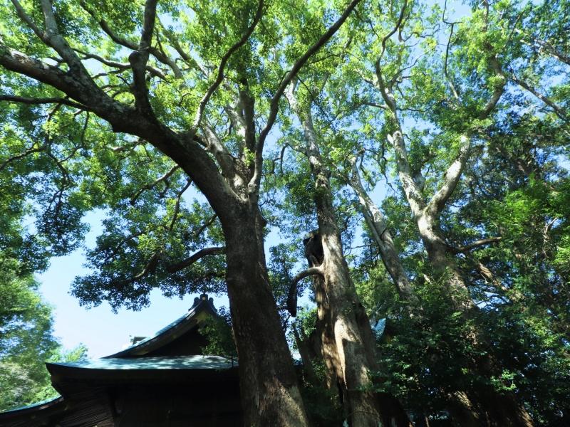 【千葉】ハイキングで巡れる!発酵の里・神崎町の観光スポット15選