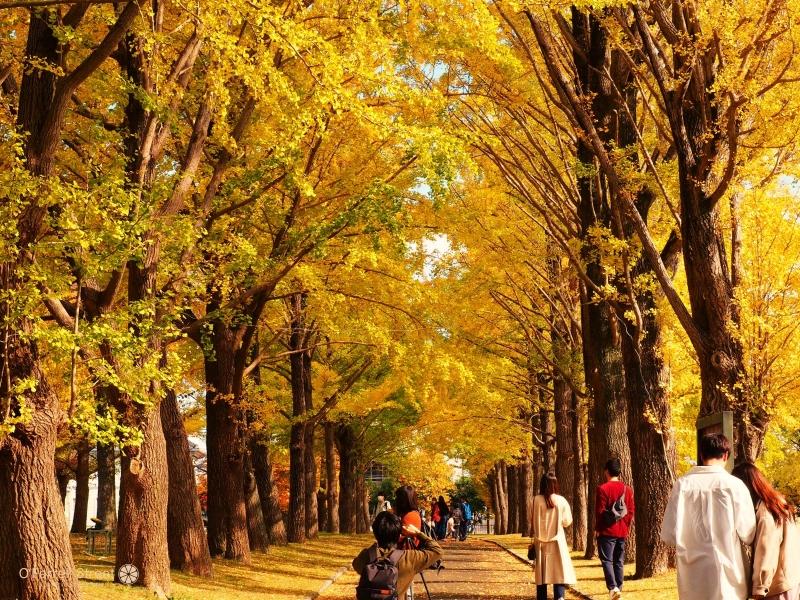 何度でも訪れたい!季節を楽しむ水戸観光9選【茨城】