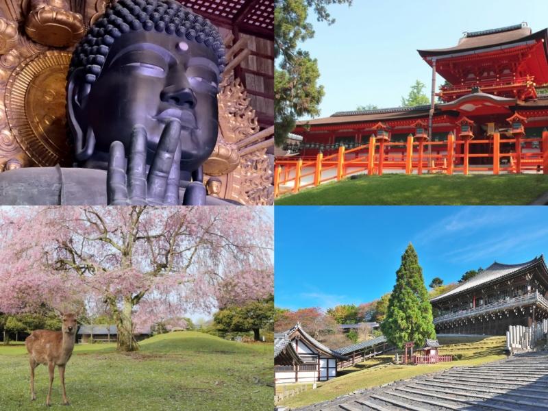 【奈良】奈良公園・東大寺・春日大社をめぐる1日観光モデルコース