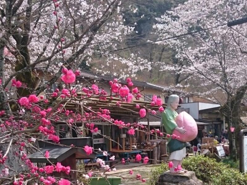 【愛知県】『鬼滅の刃』聖地巡礼におススメ!日本で唯一の神を祀る桃太郎神社