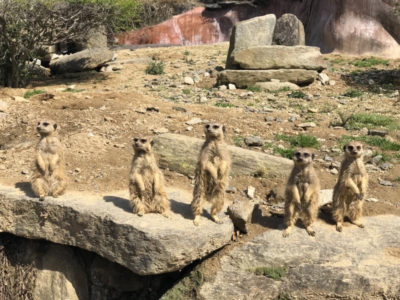 長崎バイオパークでかわいい動物たちに癒される!
