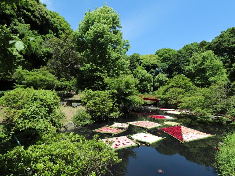 【茨城】牡丹と芍薬の「つくば牡丹園」!ランチや園内エリアを紹介