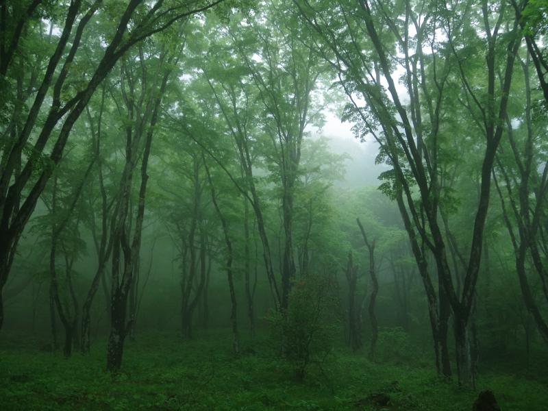 【群馬県】マニアへ捧ぐ!自然の音だけが響き渡る秘境の中の秘境