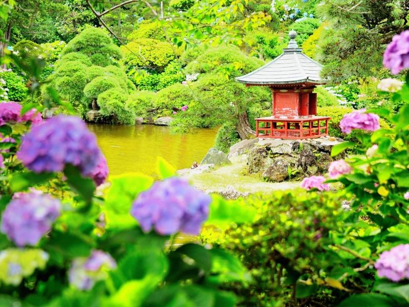 日本庭園と紫陽花が魅力!保和苑の見どころ【茨城】