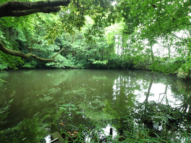 【茨城】無料で1時間のウォーキングができる!牛久自然観察の森