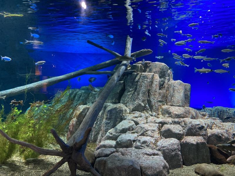 【北海道】サケのふるさと 千歳水族館が面白い!新千歳空港からもすぐ