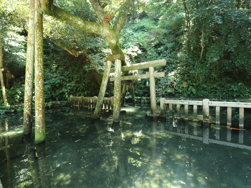 【茨城】湧水茶屋やお水取りを満喫!鹿島神宮境内「御手洗池」とは