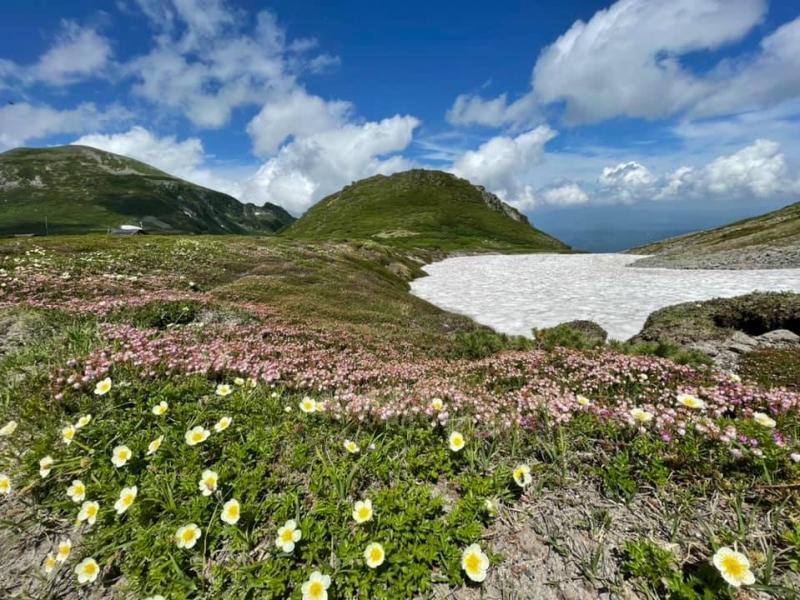 高山植物と雪の大絶景!真夏でもひんやりの「黒岳石室」へ【北海道】